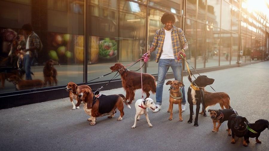 Nebenbei-Geld-verdienen-als-Hundesitter