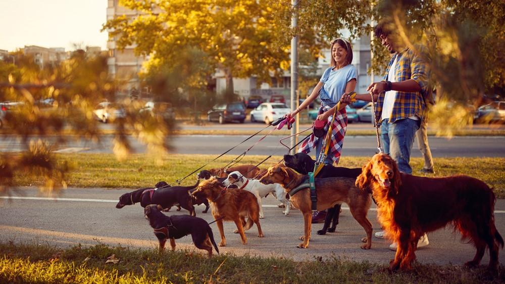 Schnell-Geld-verdienen-ohne-risiko-als-Dogsitter